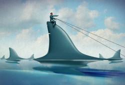 Riding on a Shark